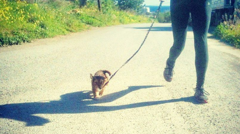 pasear sin tirones