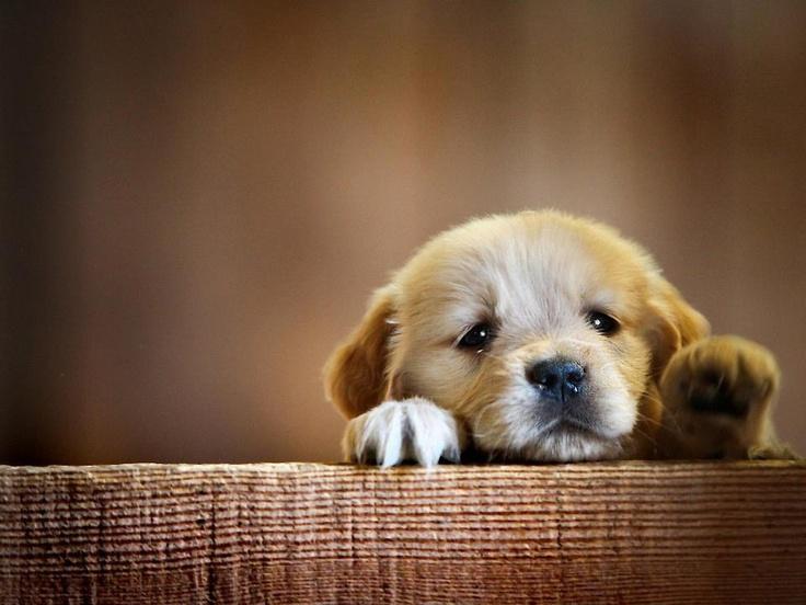 enfermedad cachorro