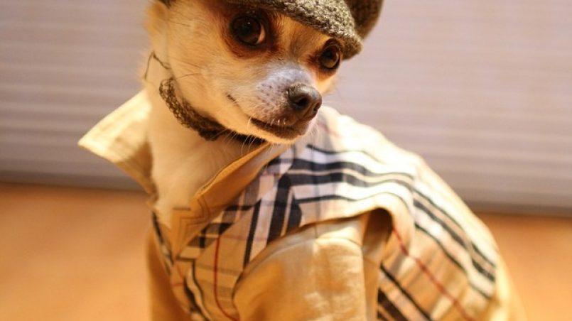 modas en perros que jamás deberían permitirse