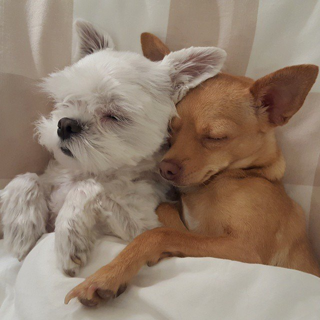 es mejor dos perros en casa