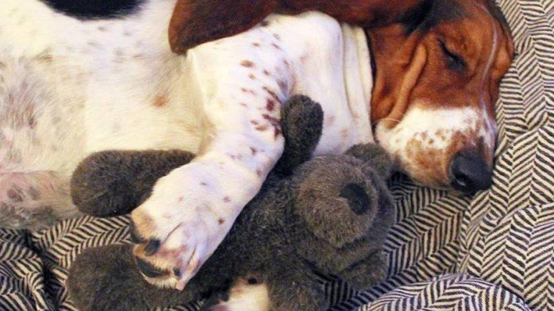 todo sobre el dormir de los perros