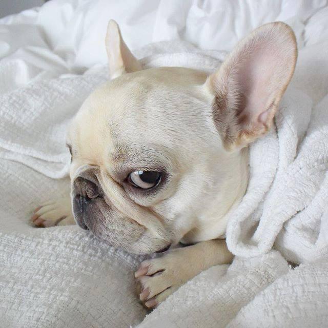 resfriado en el perro