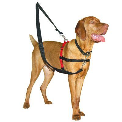 collar antitirones para perros