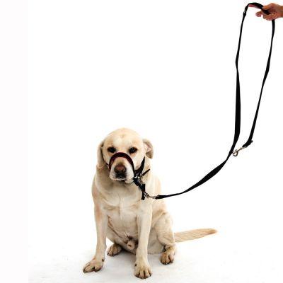 collar antitirones de perros