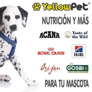 The Yellow Pet