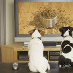 Dog Tv: un canal de televisión para perros