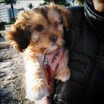 cosas que necesita un propietario cuando adopta un perro