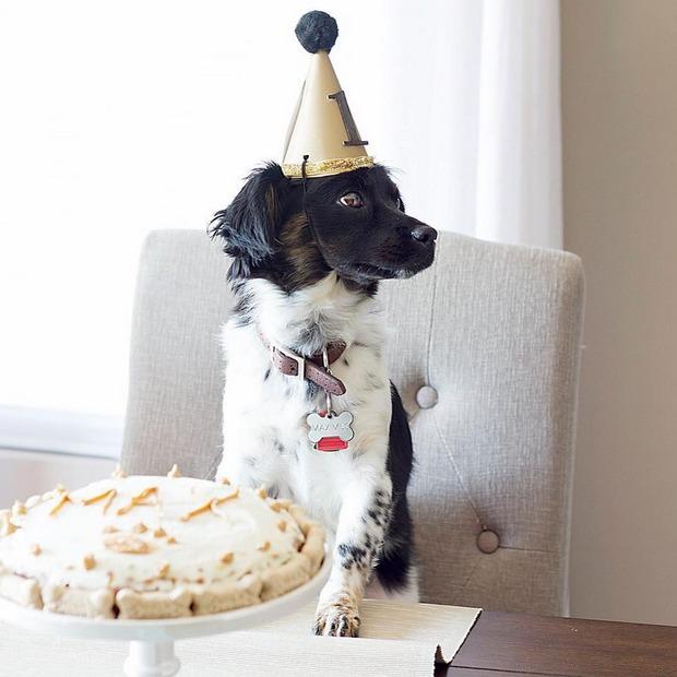 celebrar el cumpleaños de tu perro