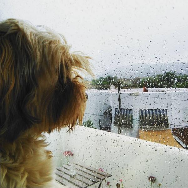 juegos de perros en días de lluvia