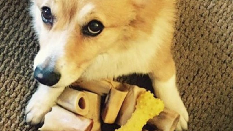 dar huesos al perro
