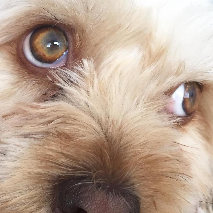 problemas y enfermedades en los ojos de los perros