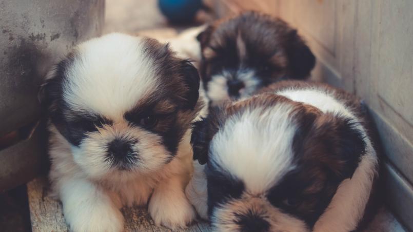 tráfico de perros