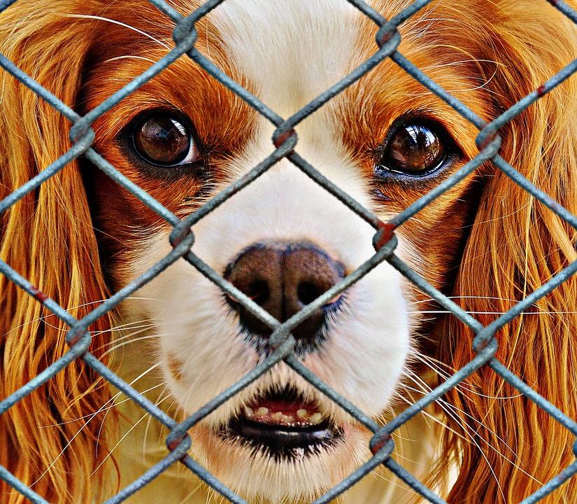 abandonos de perros