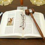 derechos y deberes del perro
