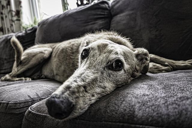 perro hace destrozos en casa