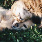 perros quieren más a sus dueños que los gatos