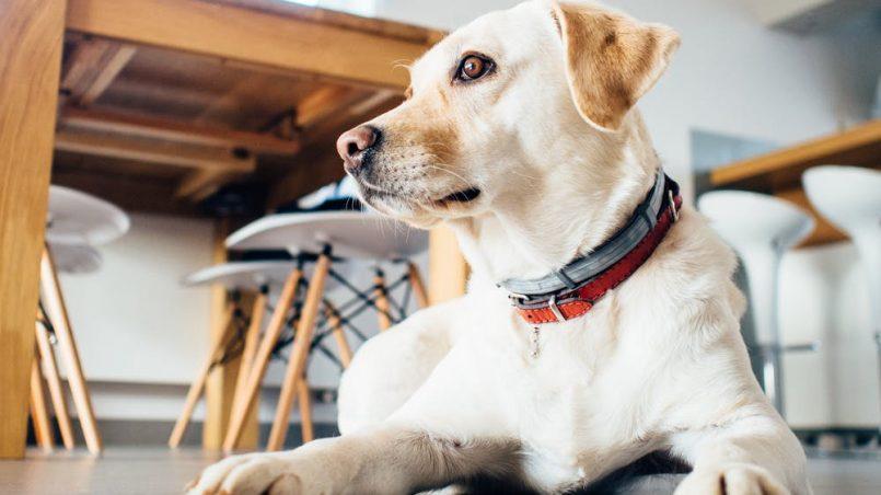 normas para perros