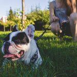 adiestrar o educar a un perro