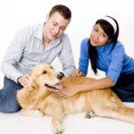 seguro para perros