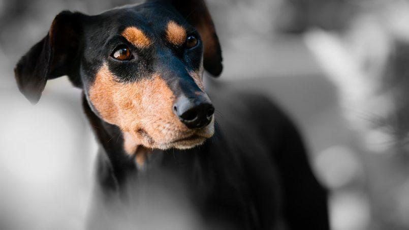 soplar a un perro en la cara