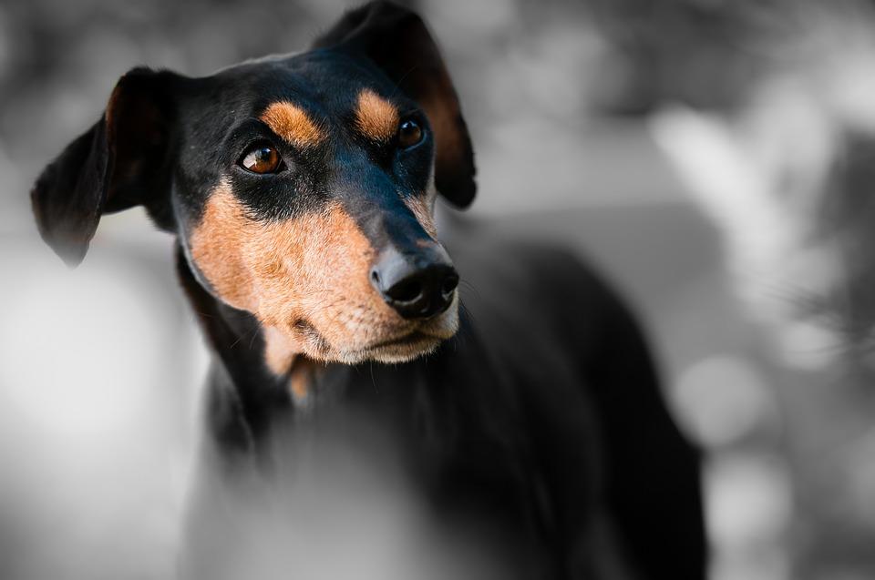 soplar a un perro a la cara