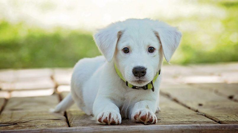 piensos para mascotas