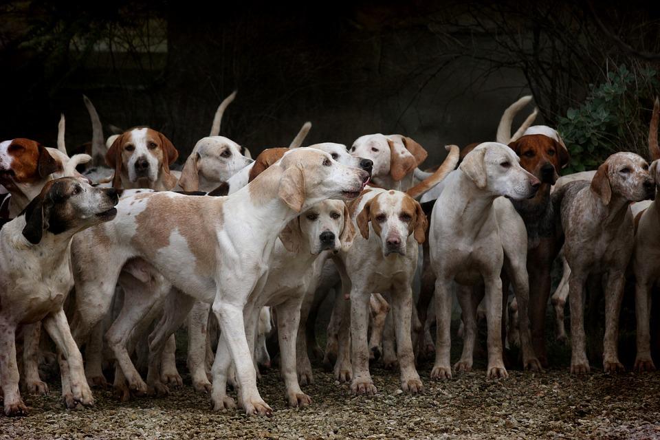 Las razas de perros más populares