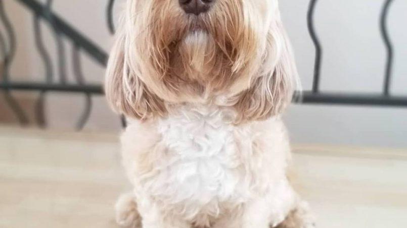 día del perro sin raza