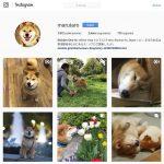 cómo crear una cuenta de Instagram para perro