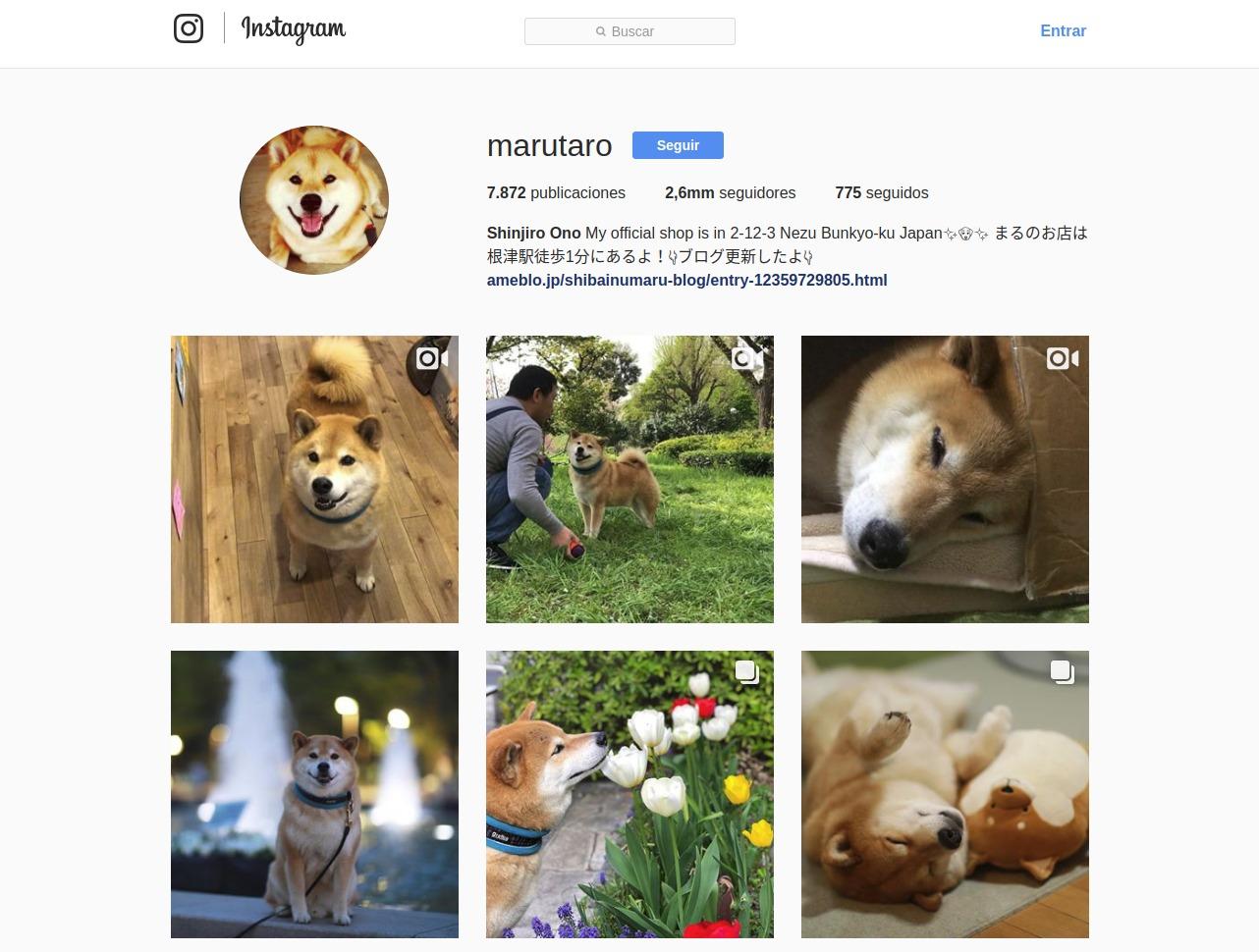 hacer una cuenta de Instagram para tu perro