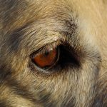 como ven los perros