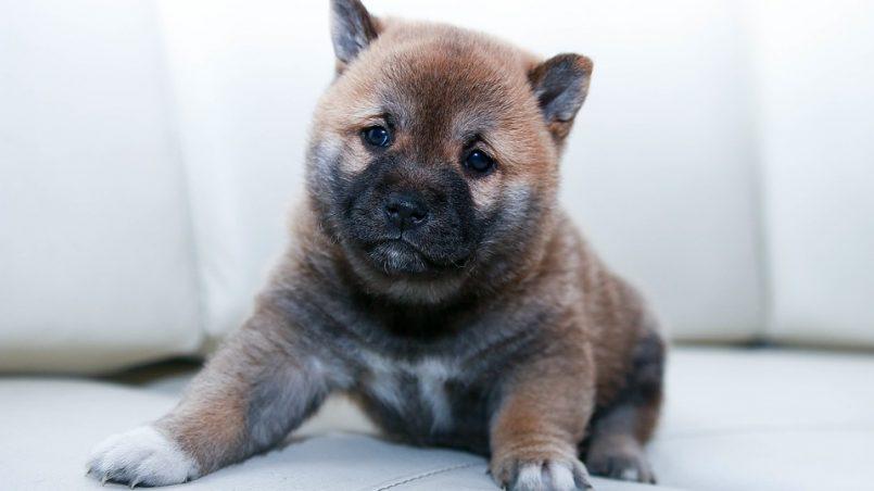 nombres para perros y perras