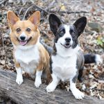 insectos peligrosos para perros