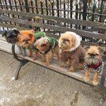 10 formas de socializar un perro