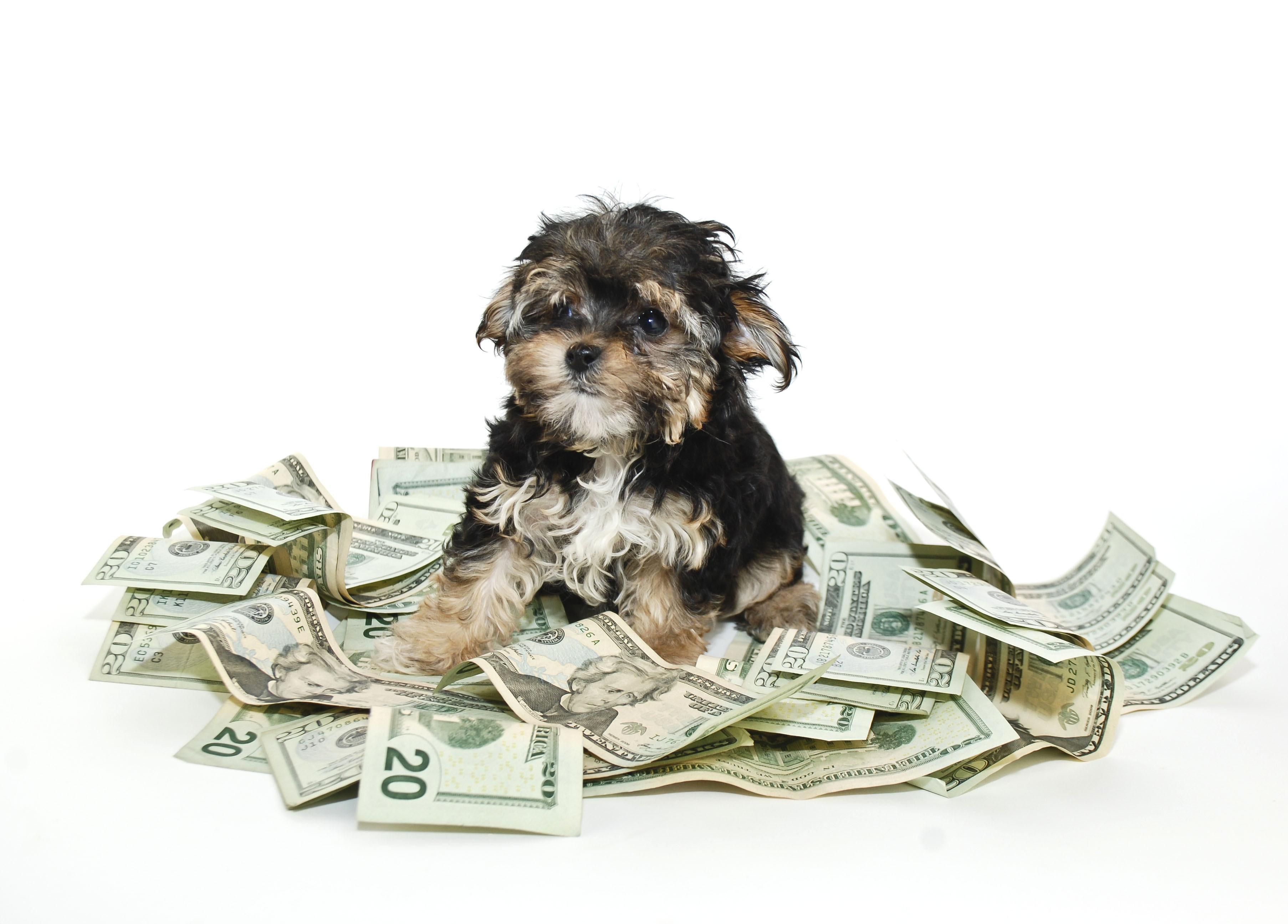 el coste anual de un perro