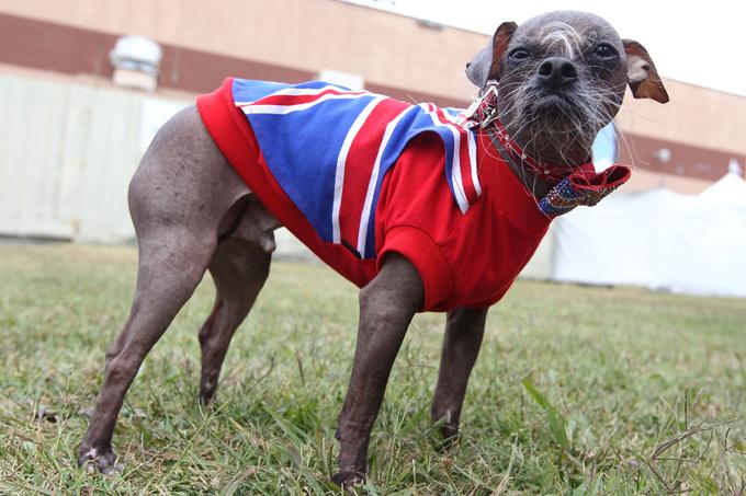 perro más feo del mundo