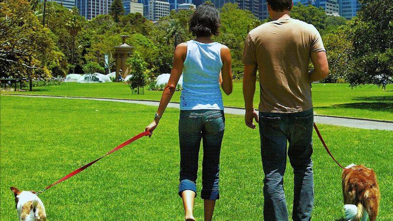 5 claves para pasear a tu perro sin estrés
