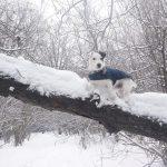 5 cosas que debes evitar hacer con tu perro en invierno