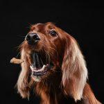 artículos de educación canina