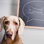 por qué los perros entierran cosas