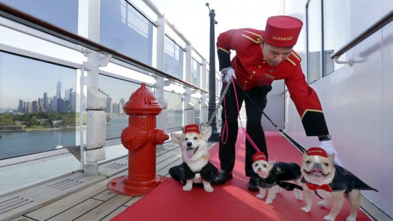 cruceros con perros