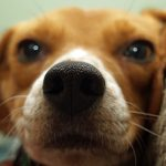 perros huelen nuestros genitales