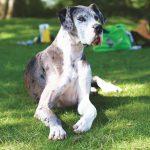 esperanza de vida de perros