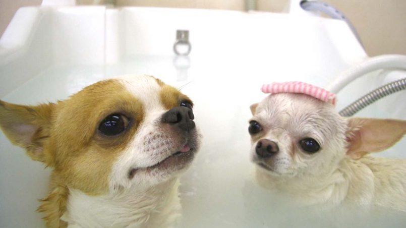 perro huele mal