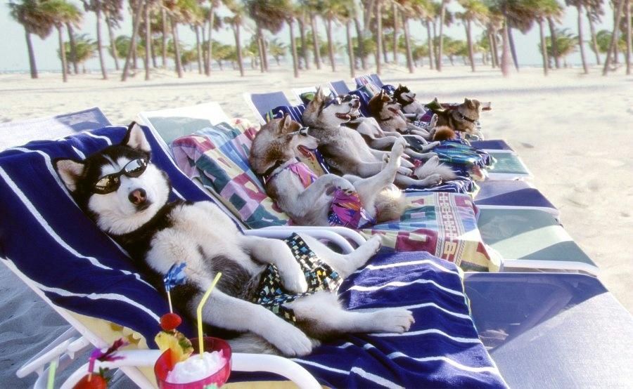peligros en la playa para perros